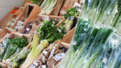 信州上田の新鮮野菜や特産物を購入できるおすすめスポット